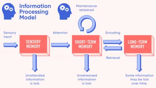 components of information processing model